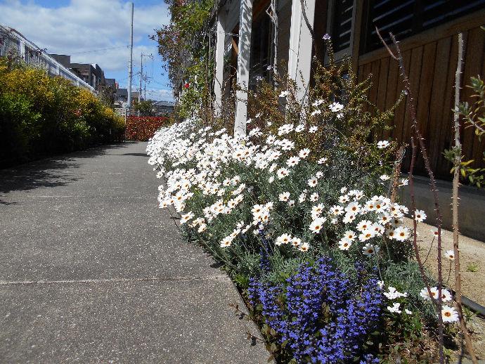 日中一時・短期入所の玄関に通じる小道は、季節ごとに様々な花が咲いています。