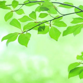 (2)療養環境の改善