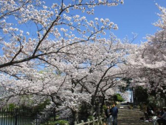 五月公園へ桜を見に行ったり★
