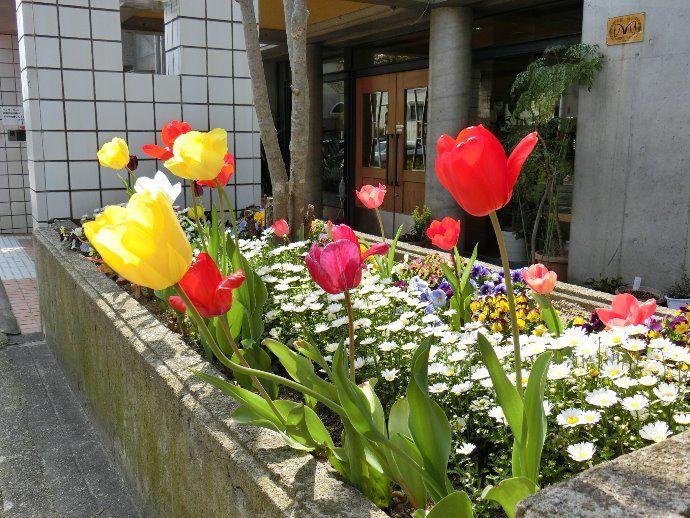 本館 玄関前花壇!