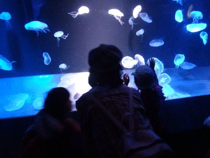 水族館へ行ったよ!