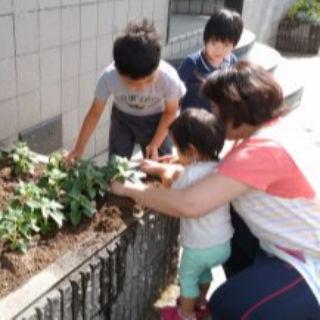 【夏】夏野菜の苗植え