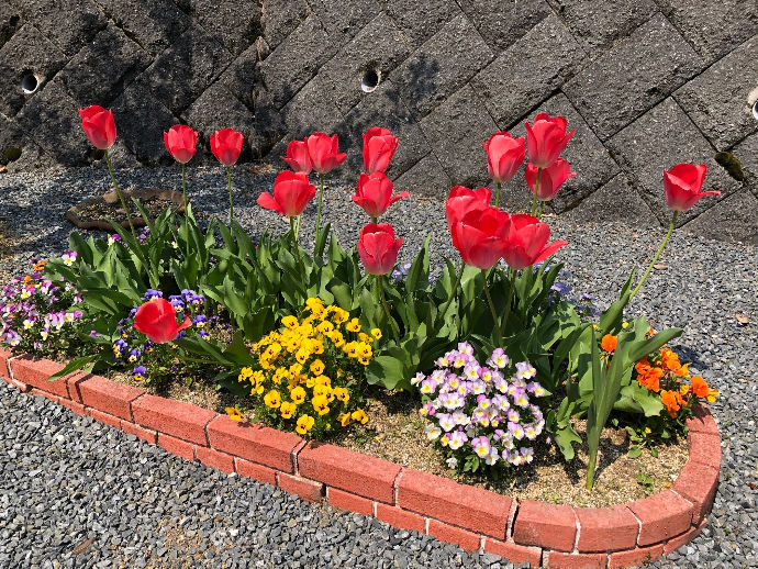 利用者様の心をポッと明るくするようなキレイなお花を育てています!
