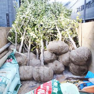 植木の作業