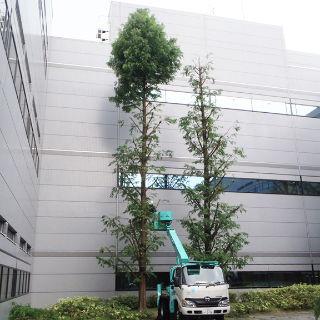 企業の緑化運動管理