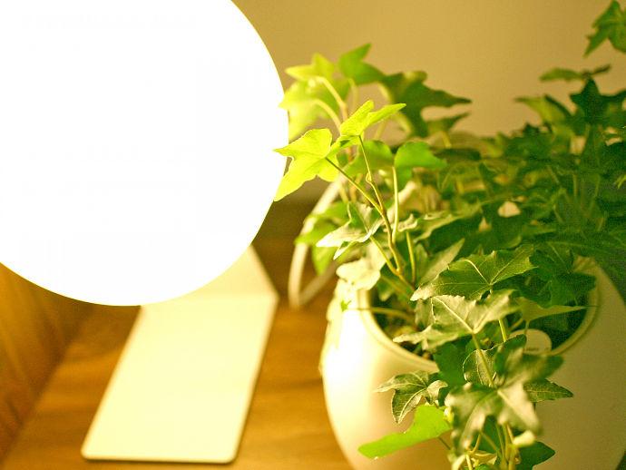 リラックスできるよう観葉植物を置いています。